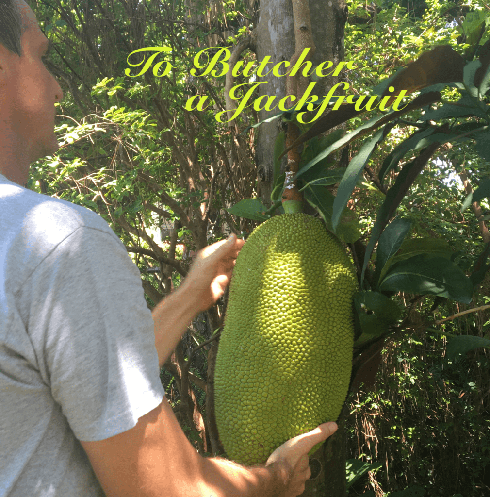 A friend and fellow fruit fanatic, Charles King, helps to pluck this massive jackfruit from its tree in Naples, FL. Vying for Veganism.